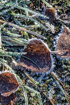 #nature #mindfulness #leaves #winter #frost #beauty #simplicity #frees #photoaboutlife #Finland #suomi #talvi #huurre #pakkanen #luonto #valokuvaus