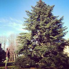 Facchinetti ha trovato l'albero di Natale! - Le Nuove Mamme