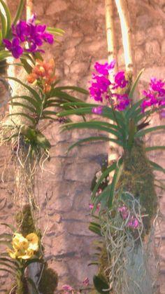 Orquidea temps flors