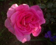 Rozsa Flower Images, Facebook Sign Up, Flowers, Plants, Floral, Plant, Royal Icing Flowers, Florals, Flower