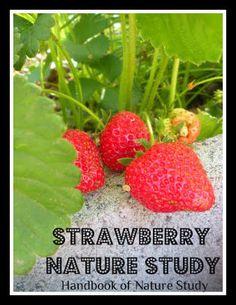 Handbook of Nature Study: Outdoor Hour Challenge-Crop Plants: Strawberries