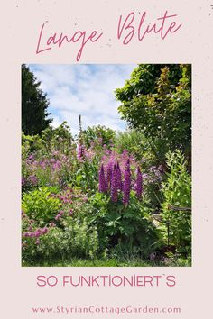 Mit dieser Schnitt Technik die Standhaftigkeit der Pflanzen erhöhen und die Blüte verlängern Chelsea, Books, Art, Shade Perennials, Plants, Art Background, Libros, Book, Kunst
