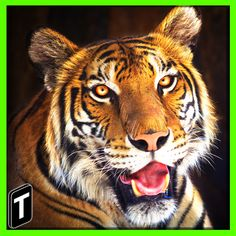 Super Tiger Sim 2017 v1.0 Mod Apk Money Grrrrrr! Dominate the Animal Kingdom as a formidable tiger! In this tiger simulation prowl through nature as a frightening beast! Use your sharp claws and nose keen vision and sensitive ears to navigate the grassy wooded terrain both day and night. Spot prey from miles away plan your attack and pounce! Explore a mesmerizing safari environment and fight different foes like grizzly bears crocodiles and lions. Experience an authentic predator experience…