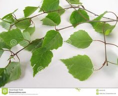 Tunna björkris ist. för murgröna på borden Plant Leaves, Wedding Flowers, Arts And Crafts, Tattoo, Plants, Gift Crafts, Tattoos, Plant, Art And Craft