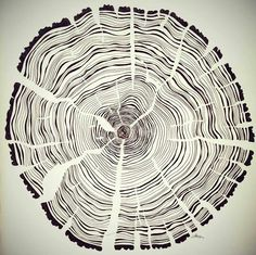 Tree year rings pen and ink illustration on paper by Wouter Haine…