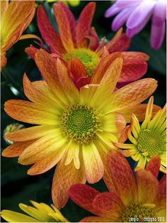 yellow tone, yellow flower