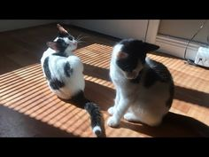 KITTENS - YouTube Kittens, Cats, Action, Youtube, Animals, Cute Kittens, Gatos, Animales, Group Action