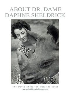 About The David Sheldrick Wildlife Trust: A Haven for Elephants and Rhinos