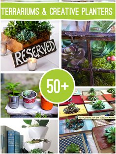 Over 50 Terrarium Succulent and Creative Planter Projects to make @savedbyloves