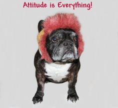 french bulldog pictures funny   Send us your funny dog photos of your dog wearing clothing or dog ...