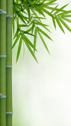 Bamboo Wallpaper, Qhd Wallpaper, Colorful Wallpaper, Wallpaper Backgrounds, Iphone Wallpapers, Best Flower Wallpaper, Mobile Wallpaper, Wallpaper Quotes, Bamboo Background