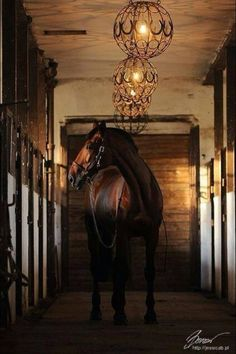 Beautiful horse - beautiful lights