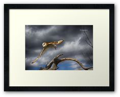 At raptor show Arizona-Sonora Desert museum • Also buy this artwork on wall prints, apparel, phone cases, and more.