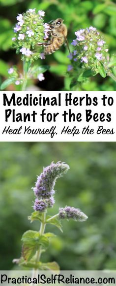 Medicinal Herbs to Plant for the Bees Heal Yourself Help the Bees Source by : practicalselfreli. Medicinal Herbs to P Healing Herbs, Medicinal Plants, Organic Gardening, Gardening Tips, Kitchen Gardening, Kitchen Herbs, Culture D'herbes, Types Of Herbs, Herb Garden Design