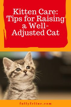 The best way to have a happy, healthy cat is to begin training when they're a kitten. Here are tips to help your kitten become the most confident, well-adjusted cat he can possibly be! #cats #kittencare #kittens