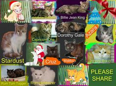 These cats/kittens desperately need a save by 3pm Thu 11/12/14. If you are a rescue or know a rescue that can help to contact Renbury Farm Animal Shelter, NSW