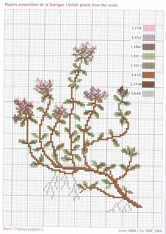Gallery.ru / Фото #33 - Herbarium_DMC - 777m