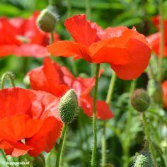 Seeds, Plants, Happy, Ser Feliz, Plant, Planets, Being Happy