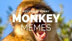 Funny Monkey Memes for Monkey Day