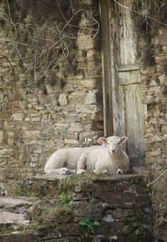 John 10:7 Truly, truly, I say to you, I AM the door of the sheep ...