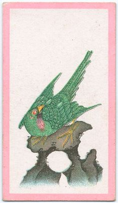Birds of the East. From New York Public Library Digital Collections.