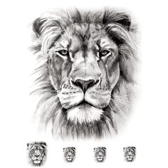 Temporary tattoo: Realistic Lion (5 pieces) - ArtWear Tattoo