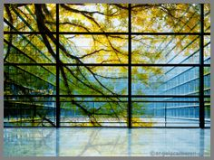 Printed trees onto glass window  Via http://www.angelacameron.com/