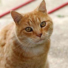 LEYENDAS, MASCOTAS Y ALGO MAS: Delicia de atún. recetas para gatos: