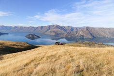 Kim Leow | New Zealand