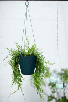 hanging green plants, perfect in the loft hanging basket #plants #garden