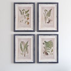 Botanical Study Framed Print & Reviews | Joss & Main