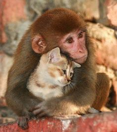 I will keep you forever.... Gorgeous monkey with his caty.
