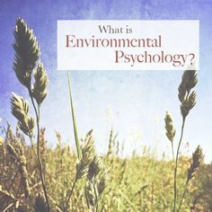 What is Environmental Psychology? Visit www.thecompassaionatehome.com to discover how your environment impacts your wellbeing