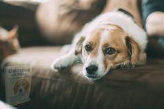 Dog Commands Training, Basic Dog Training, Leash Training, Training Dogs, Potty Training, Oils For Dogs, Pet Dogs, Pets, Pet Pet