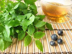 Az áfonyalevélből készült tea egy kitűnő antioxidáns | Gyógyszer Nélkül