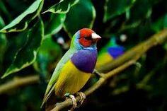 Locura de colores de la naturaleza.