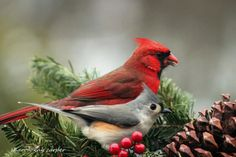 """Twin Peaks""—a Northern Cardinal and a Tufted Titmouse line up for the camera in Carper Sharon's fun photo."