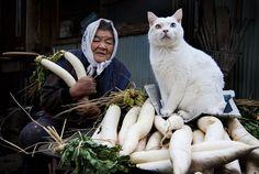 14. Fukumaru, o gato que tem um olho de cada cor