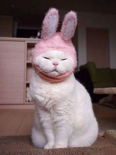Very interesting post: TOP 44 Cats Pictures. Also dompiсt.сom lot of interesting things on Funny Animals, Funny Cat.