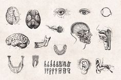 Human-Anatomy-Vintage-Engraving-Illustrations-05.jpg (1340×892)