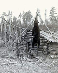 1880 HUNTERS CABIN, RIFLES HUGE WHITETAIL BUCK DEER & BEAR