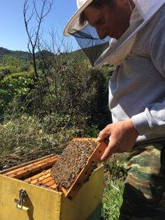 kalios miel grece naturel remede grand mere santé organisme antibiotique sport 5