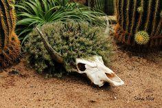 photos cactus