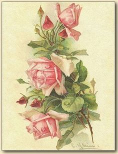 Look at this stunning Catherine Klein pink roses postcard, found at Vintage Images: I have removed the background for a png digital version, and played around with it, creating both a border and a … Floral Vintage, Art Vintage, Vintage Cards, Vintage Flowers, Vintage Images, Vintage Prints, Decoupage Vintage, French Vintage, Catherine Klein