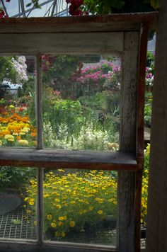 Window view of back gardens.