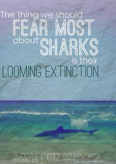 But is this true for everyone? There are people everywhere, terrified of sharks, their teeth and their inevitable attack. The thing is though, sharks only kill approximately 5 people per year. We kill 8,000 sharks per hour.