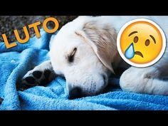tudosobrecachorros.com.br meu-cachorro-morreu-como-lidar-morte-animal