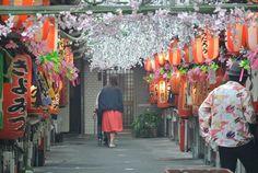 Sous les cerisiers à Shizuoka ©Kazushige_Tanase#Journaldujapon