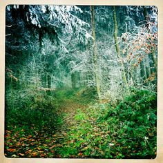 frost. forest. changing seasons.