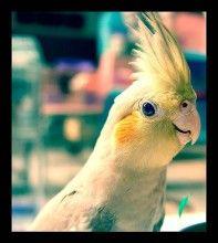 Parrot Baby Animal Photo
